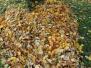 Fotosoutěž Podzimní srdce - vyhlášení výsledků